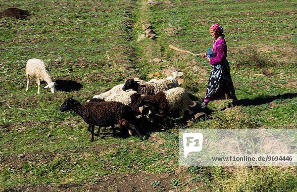 Frau Berg Schaf Ovis aries Feld Marokko alt