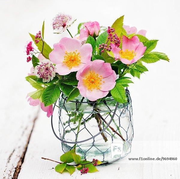 Glas Rose Blumenvase Sterndolde Astrantia