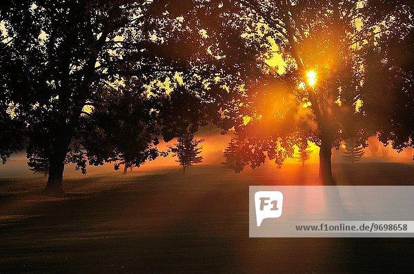 nahe Morgen Baum Sonnenaufgang früh Laubbaum Alberta Kanada