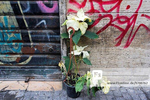 Pflanze Italien Neapel