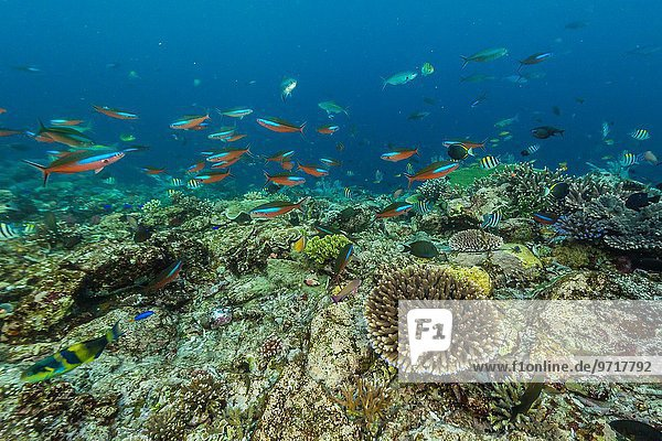 A profusion of coral and reef fish on Batu Bolong  Komodo National Park  Indonesia.