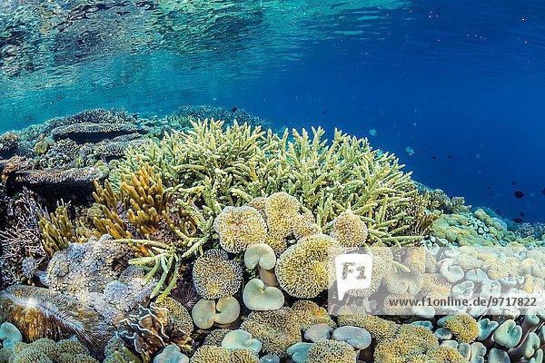 Hard and soft corals and reef fish underwater on Sebayur Island  Komodo National Park  Indonesia.