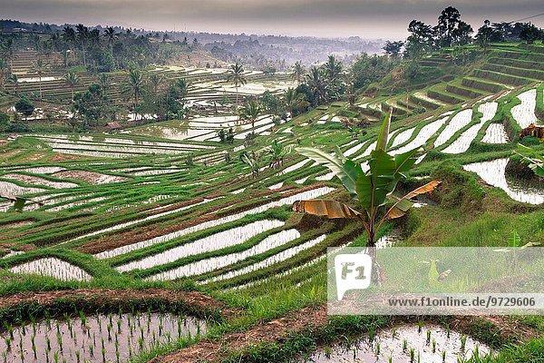 Asien Indonesien