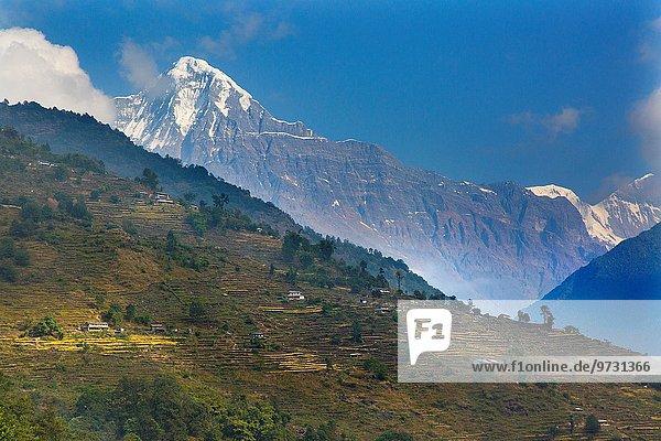 nahe Landwirtschaft Tal Dorf Messgerät Annapurna Ghandruk