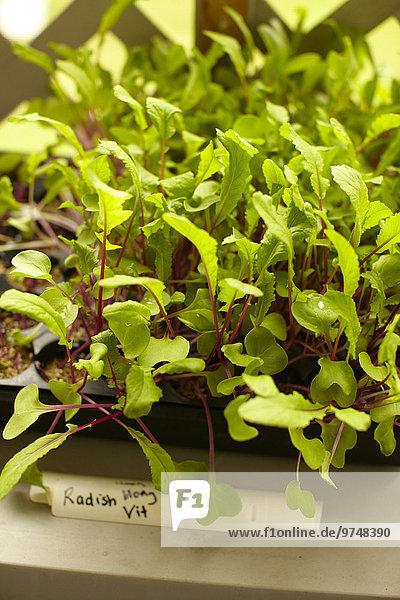 hoch oben Wachstum Pflanze Ansicht Flachwinkelansicht Winkel