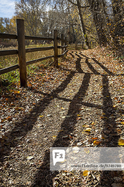 Wooden fence casting shadows on dirt path