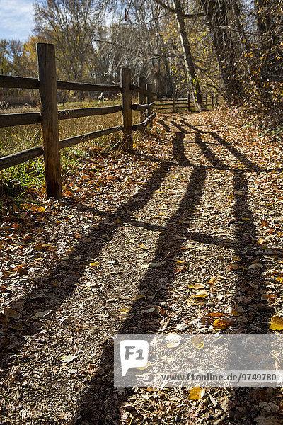 Holzzaun Weg Schatten schmutzig