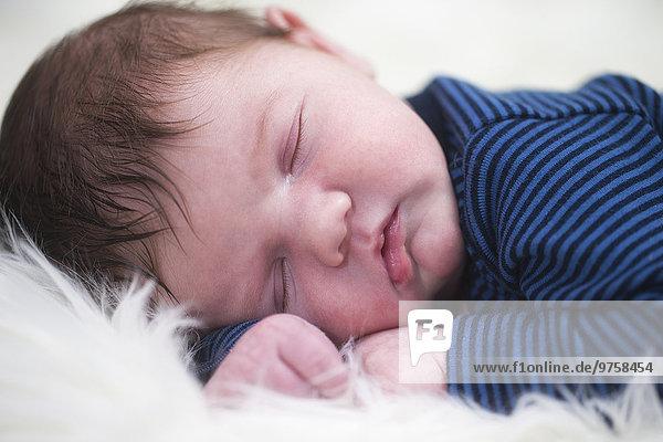 Porträt des schlafenden Jungen auf Schaffell Porträt des schlafenden Jungen auf Schaffell