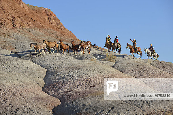 USA  Wyoming  Cowboys und Cowgirls hüten Pferde in Badlands
