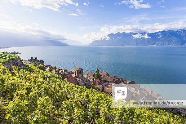 Switzerland  Lavaux  Lake Geneva  wine-growing area Saint-Saphorin