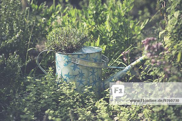 Gepflanzte Gießkanne im Garten