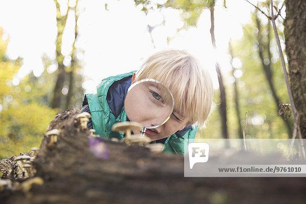 Kleiner Junge beobachtet Pilze mit Lupe im Wald