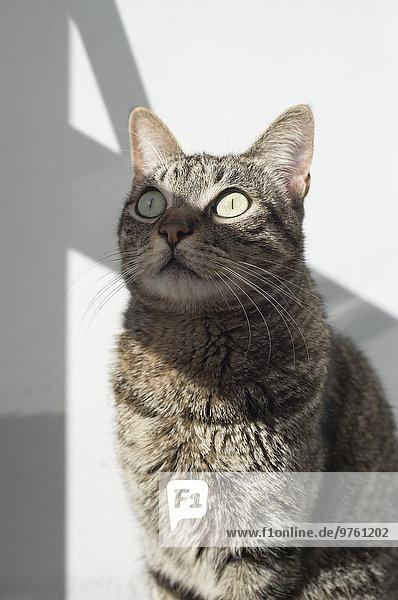 Tabby Katze im Sonnenlicht