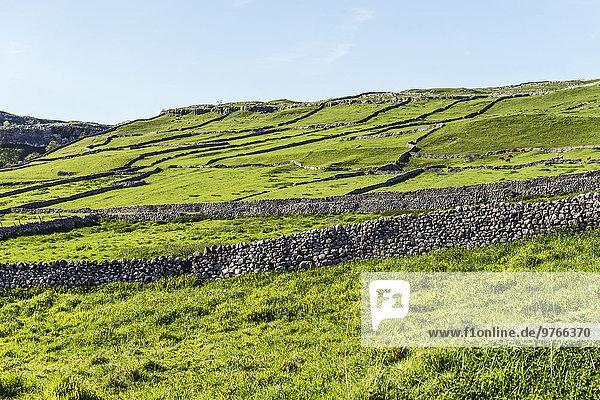 Landschaft mit Steinmauern im Yorkshire Dales Nationalpark  England  Großbritannien