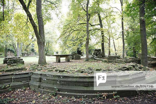 Wald an der Klosterruine Disibodenberg  Rheinland-Pfalz  Deutschland