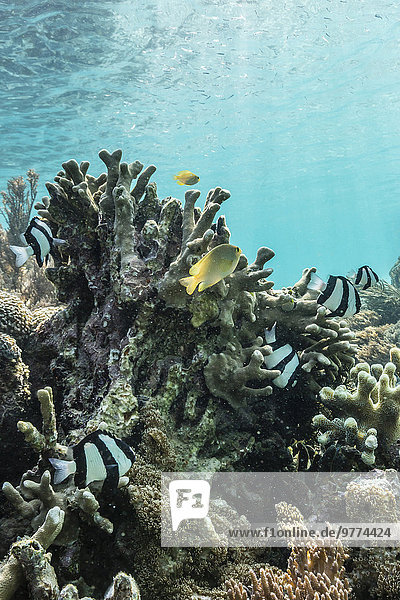 Strand Unterwasseraufnahme unter Wasser Sand pink Südostasien Asien Indonesien Komodo-Nationalpark Riff