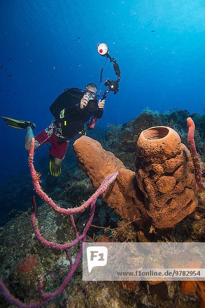 fotografieren Westindische Inseln Mittelamerika Bahamas Topfschwamm Schwamm