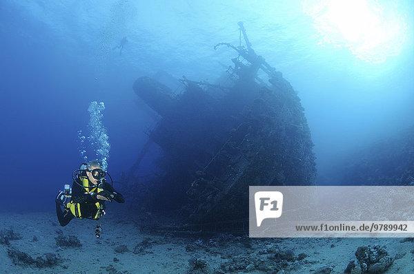 Taucher betrachtet Schiffswrack Giannis D  Rotes Meer  Sharm el Sheikh  Ägypten  Afrika