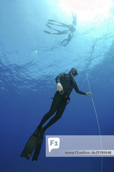 Freitauchen im Roten Meer  Ägypten  Afrika