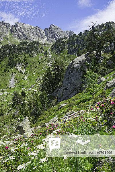 Blumenwiese  Refugi dera Restanca  La Val d'Aran  Katalonien  Spanien  Europa