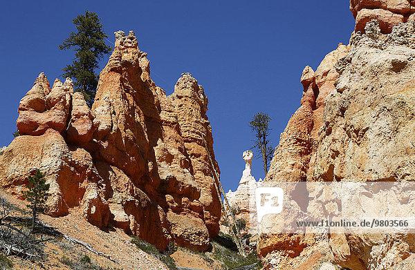 Nationalpark Landschaftlich schön landschaftlich reizvoll Felsen Vereinigte Staaten von Amerika USA Steilküste April