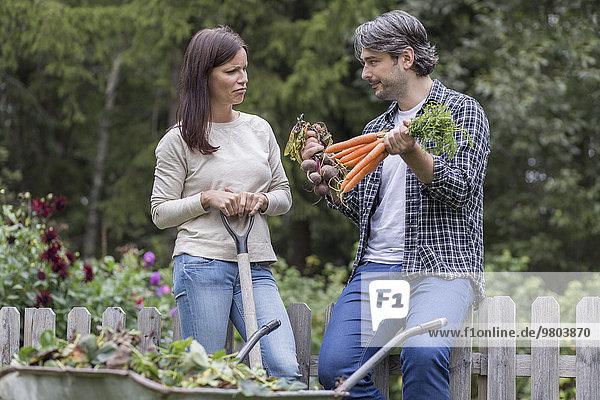 Verwirrtes mittleres erwachsenes Paar bei der Wahl zwischen Karotten und Rüben auf dem Biobauernhof