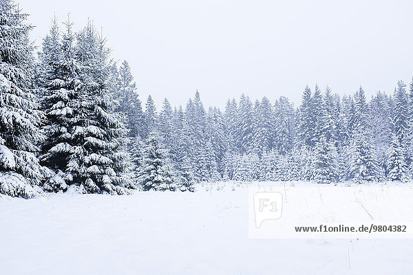 Snow covered trees and landscape against clear sky