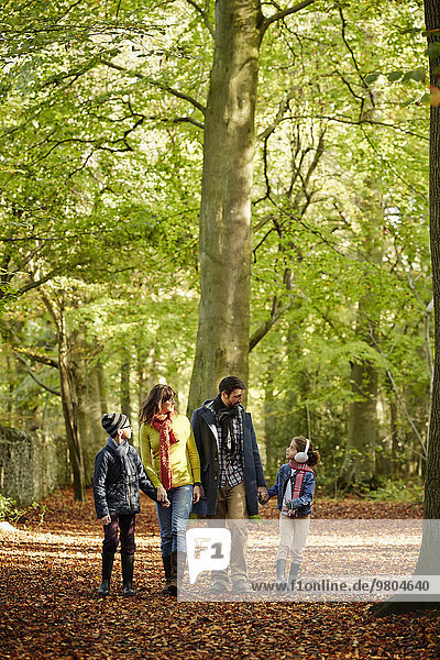 Laubwald grün Herbst rot Buche Buchen Laub