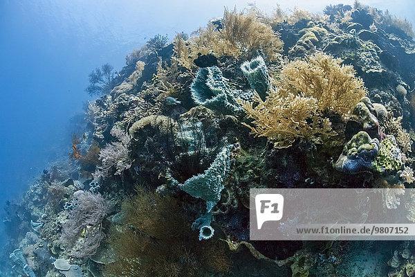 Tropical coral reef at Menjangan  Bali  Indonesia island