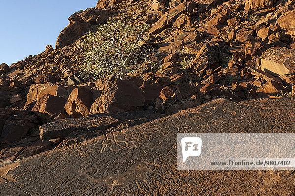 Rock drawings  engravings  rock formations  Twyfelfontein  Kunene Region  Namibia  Africa