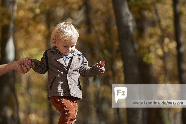 Junge  der im Wald herumläuft und Vaters Hand hält.