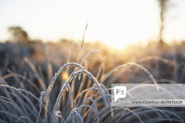 Frost covered plant in sunlight