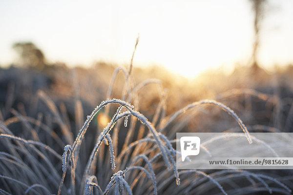 Frostbedeckte Pflanze im Sonnenlicht