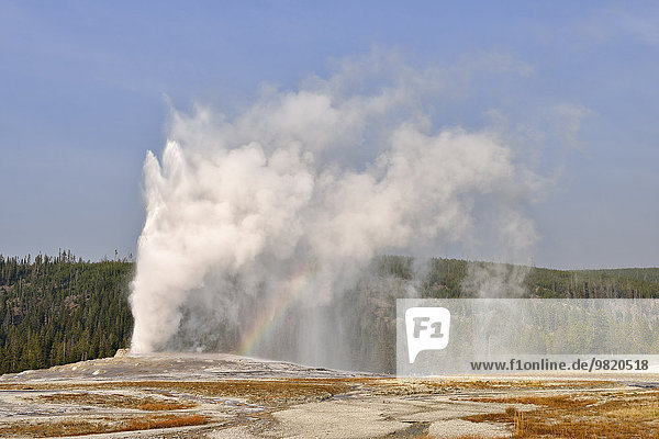 USA  Wyoming  Yellowstone Nationalpark  Old Faithful Geysir Ausbruch