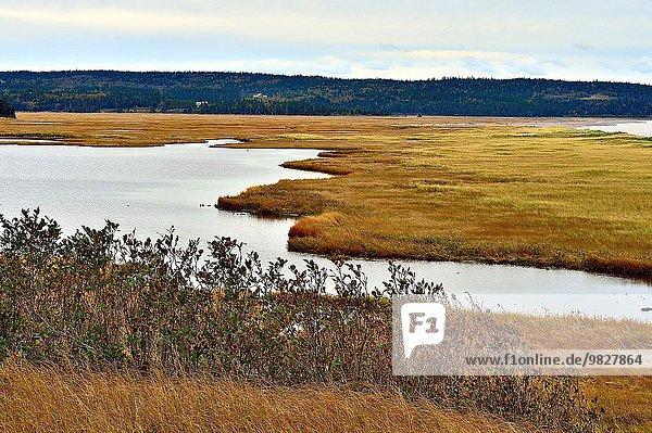 nahe Wasser Landschaft Querformat Sumpf Bucht Braunschweig Kanada Meeresarm neu Speisesalz Salz