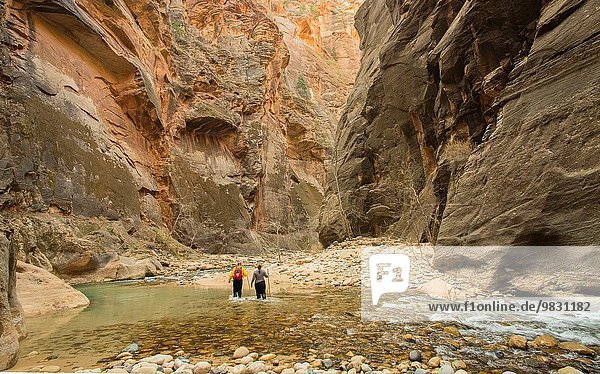 Two hikers wade through the unusual river hiking trail in a slot canyon called The Narrows in Zion National Park.