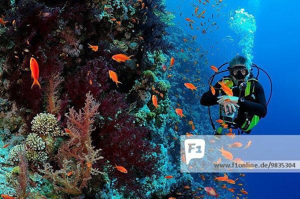 Nationalpark sehen Scharm El-Scheich Sharm el-Sheikh Afrika Ägypten Rotes Meer Riff