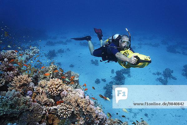 Taucher mit Scooter Unterwasserfahrzeug erkundet Korallenriff  Soma Bay  Hurghada  Ägypten  Rotes Meer  Afrika