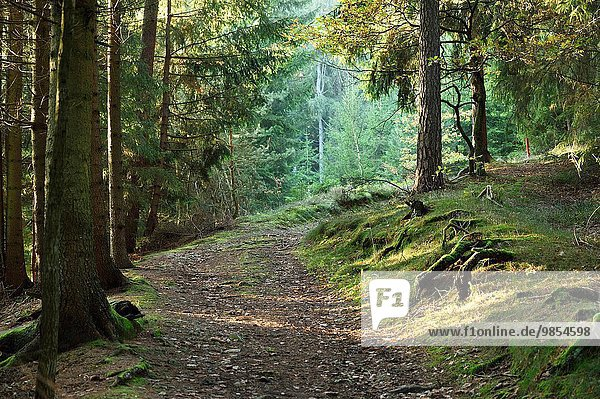 Landscape of a trail going throuh a forest in autumn.