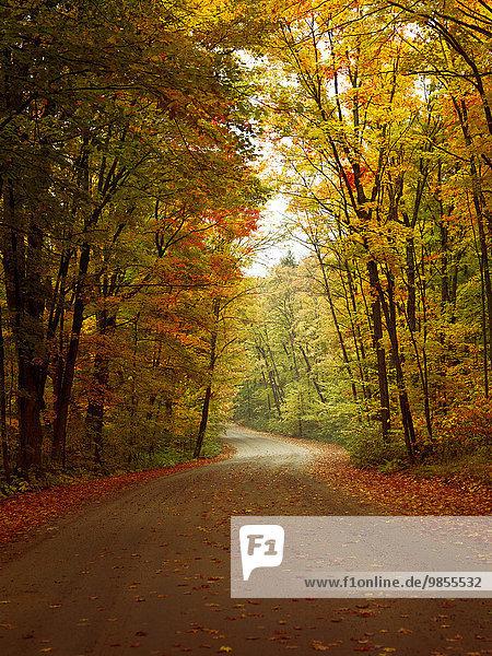 Kurvige Forststraße im Herbst  Algonquin Provincial Park  Provinz Ontario  Kanada  Nordamerika