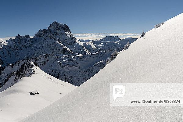 Verschneiter Gipfel vom Widderstein  Baad  Kleinwalsertal  Vorarlberg  Österreich  Europa