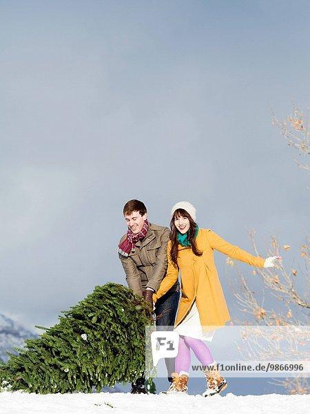 Weihnachtsbaum Tannenbaum jung bekommen Schnee