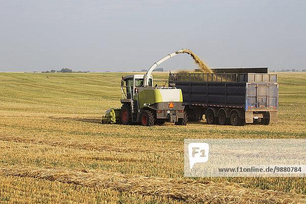 schneiden Feld sammeln Lastkraftwagen Weizen geben Reihe Mähdrescher Alberta Kanada