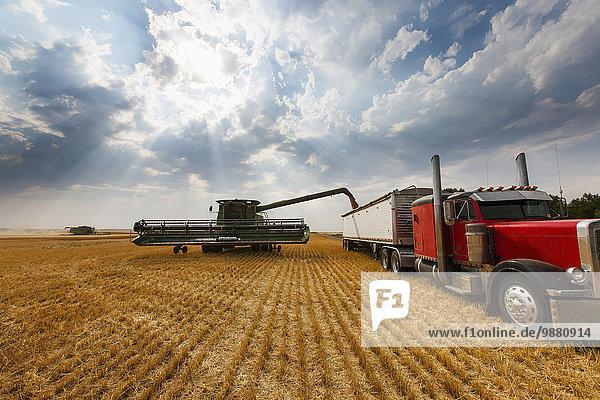 Amerika Tradition ernten Verbindung Weizenfeld Betrieb North Dakota