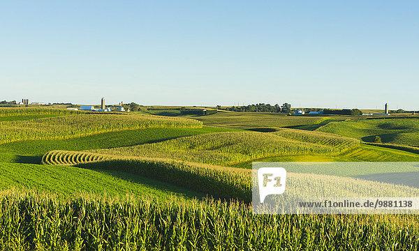 zwischen inmitten mitten Amerika Milchprodukt Bauernhof Hof Höfe Feld Verbindung Iowa