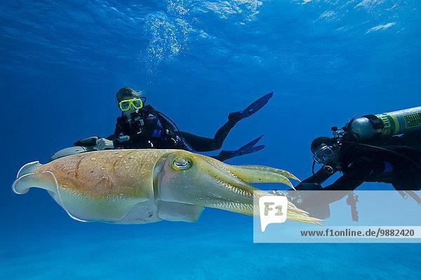 sepia getont Unterwasseraufnahme unter Wasser Kickboard Taucher Tintenfisch