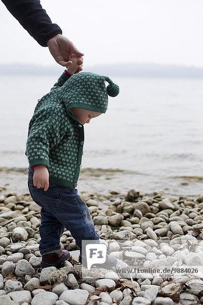 Baby girl holding fathers hand stepping on lakeside pebbles  Lake Starnberg  Bavaria  Germany