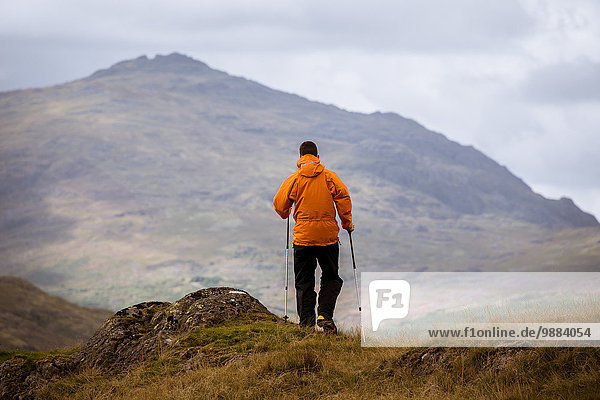 Rear view of young male hiker looking out to mountain  The Lake District  Cumbria  UK
