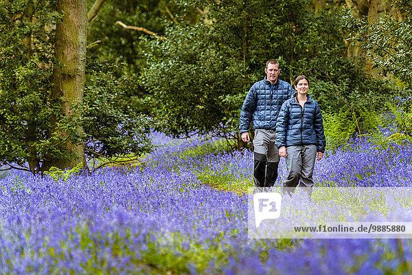Junge Frau und Mann wandern durch Blauglockenwälder  Pateley Bridge  Nidderdale  Yorkshire Dales