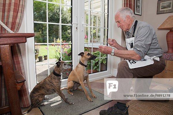 Senior Mann  der den Hunden beibringt  auf Leckereien zu warten.